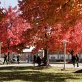 Campus trees in autumn