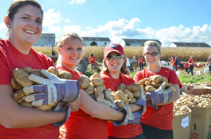 Volunteers show off potatoes they've gathered