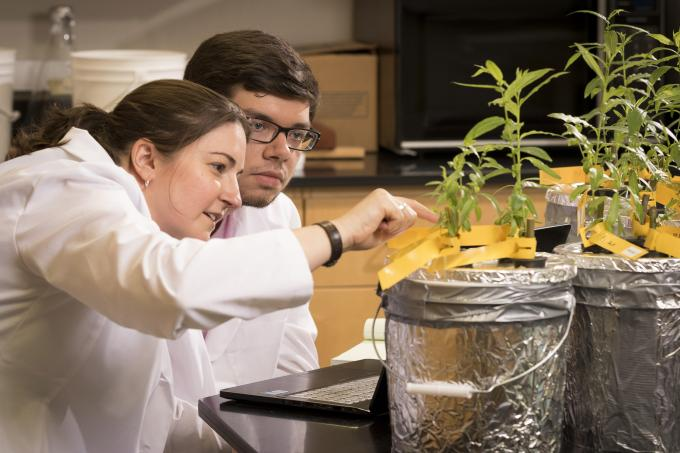 Student and professor work in botany lab